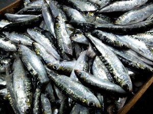 Sardines are can fit in any budget