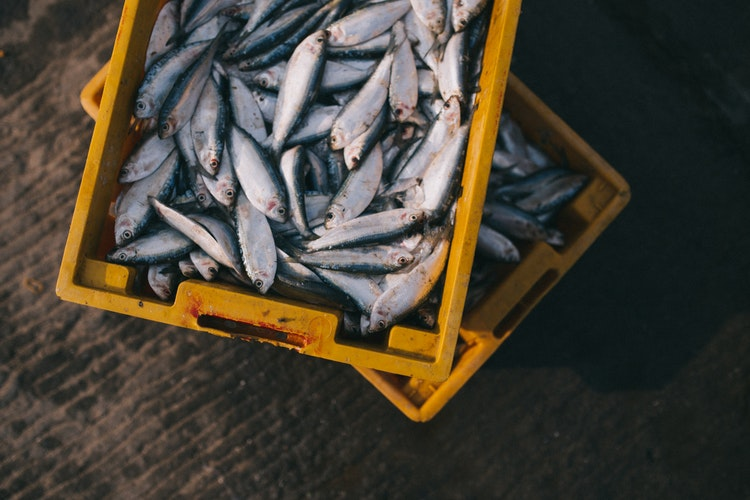 What Every Person Should Know About Sardines