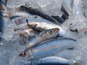 What are sardines